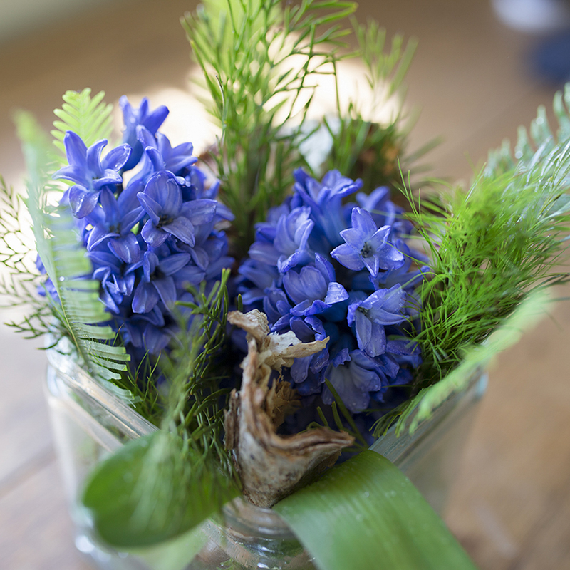 Stenocarpus (forest lace), Koala Fern and Umbrella Fern with hyacinths
