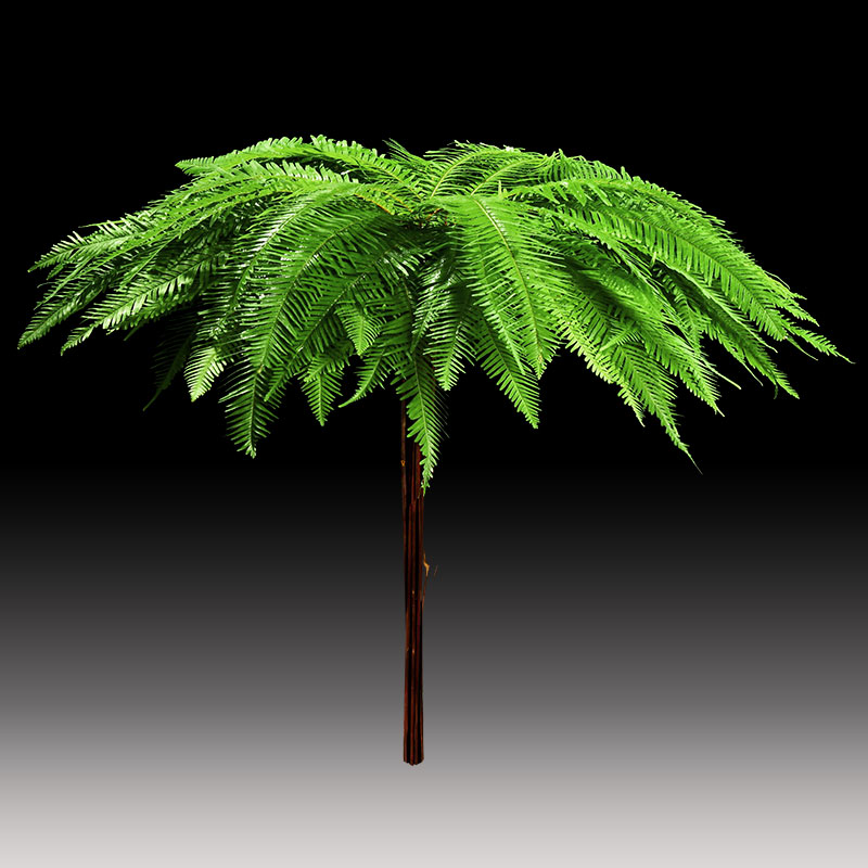 Umbrella fern product image