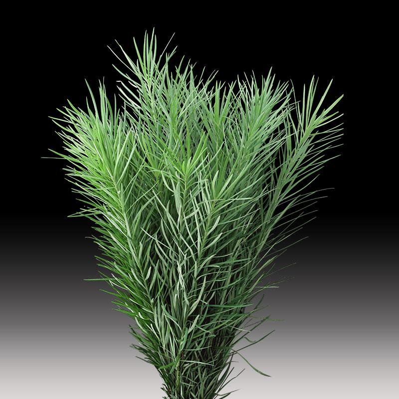 Emu Grass product image