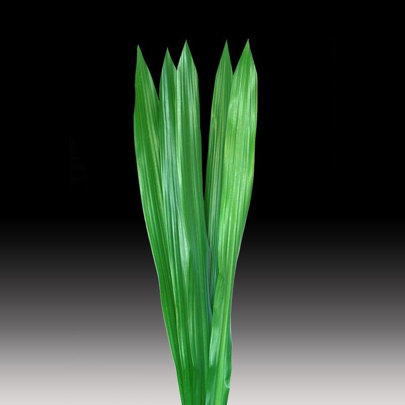Gymea Leaves product image
