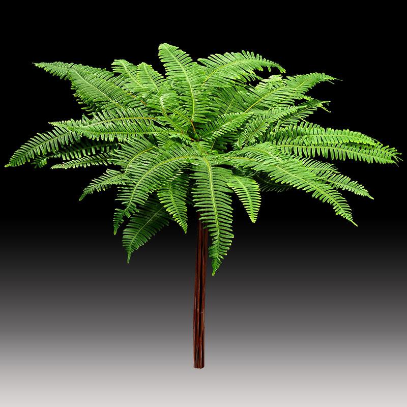 10 stem bunch of Plantation Umbrella fern-native australian Foliage