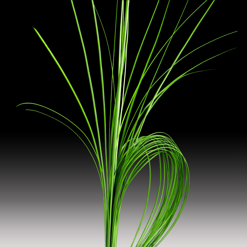 Steel Grass product image