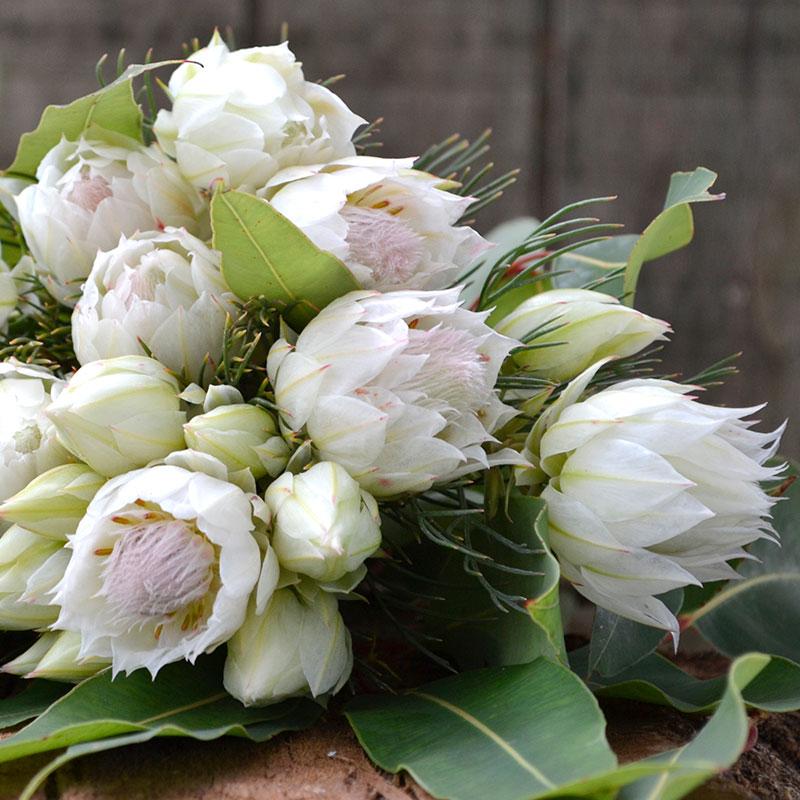 Loose bouquet of serruria, stenocarpus and gum leaves