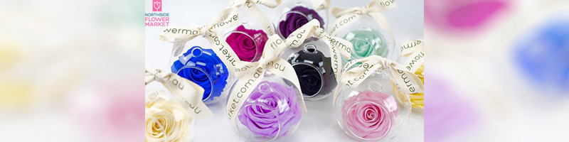The Enchanted Rose Collection