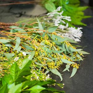 Seeded Jarrah, Smoke Bush and Umbrella Fern