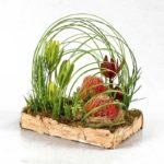 ARRANGEMENT ~ Designer : Michaela Vernon, Wildflowers Australia competition ~ Foliage & Flowers : Steel Grass, Emu Grass™, leucadendron, banksia, berzelia