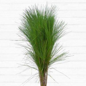 Aussie Pine Tails™