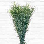 Emu Grass™