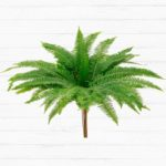 Plantation Umbrella Fern™