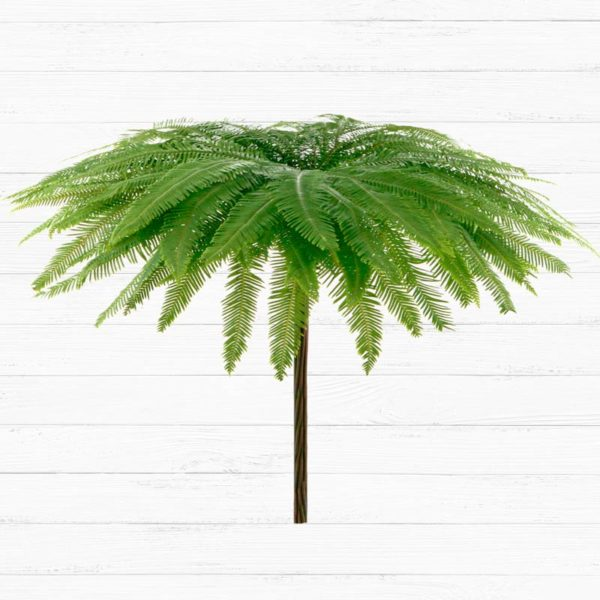 Umbrella Fern™