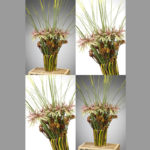 VASE ~ Designer : Flower Council Holland ~ Flowers & Foliage : kangaroo paw, Steel Grass